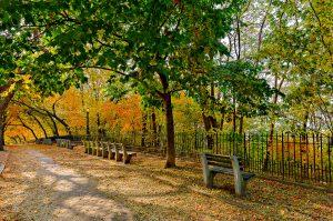 Killer Joe Photography - Shore Road Brooklyn Autumn Landscape